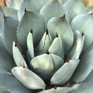 Water Wise Plants for Central Texas