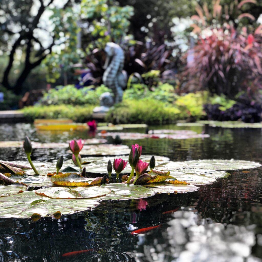 Outdoor Ornamental Pond