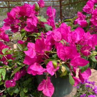 Shop Online Hill Country Water Gardens Amp Nursery