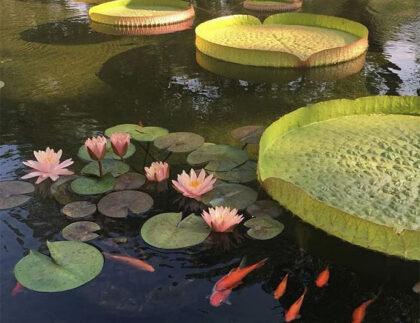 Winterizing-Your-Pond-Cedarpark-Austin-TX